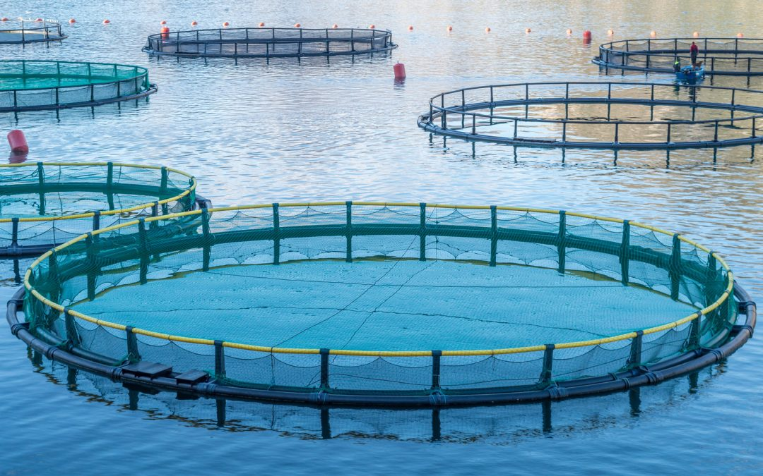 Factors that Influence Mortality in Aquaculture